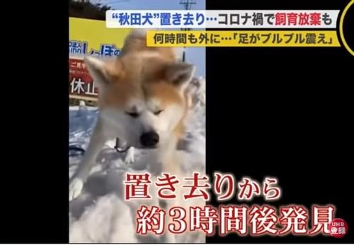 秋田犬置き去り事件