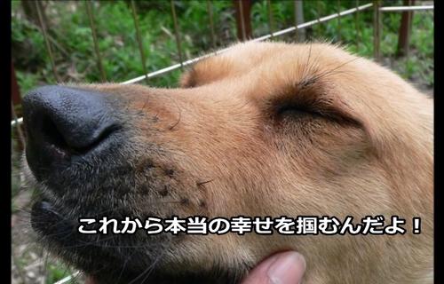 桜子001