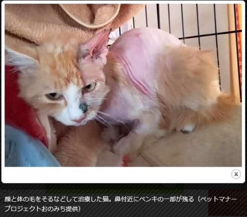広島県猫虐待21-03-29