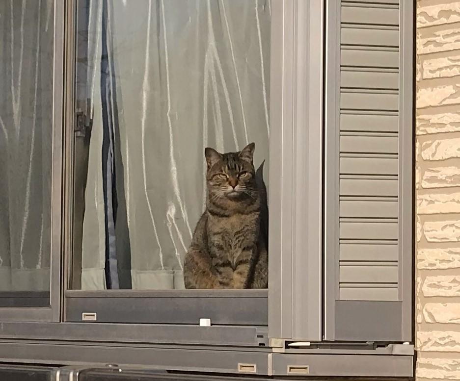 外を見ていたにゃんこ