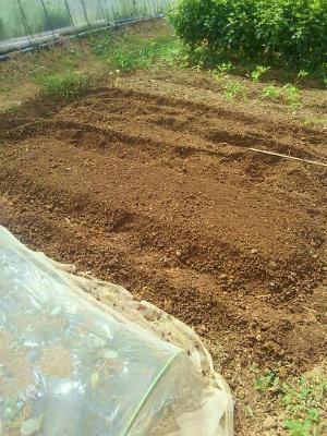 200923畝作り