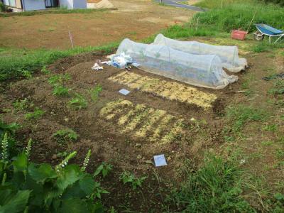 200928ハウス下手前側も播種ほぼ終了