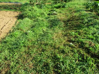 201002草刈り2