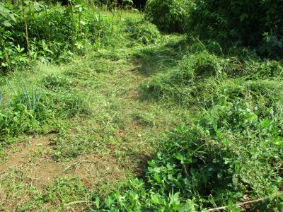 201002草刈り3