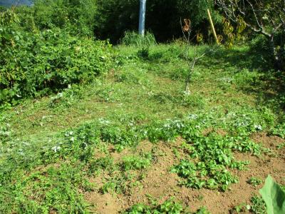 201002草刈り6