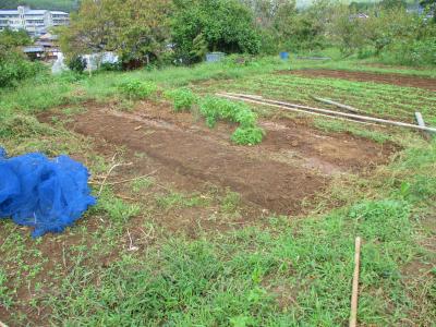 201005トマトの後の片付け2