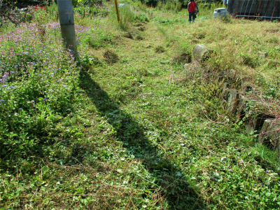 201019空き地の草刈り1