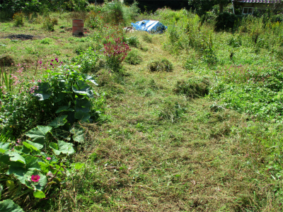 201019空き地の草刈り2