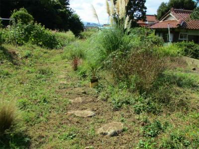201019空き地の草刈り3