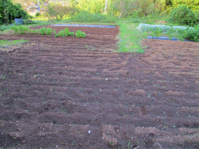 201023野菜なくただ広いそらの畑