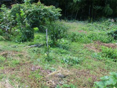 201024法面の草刈