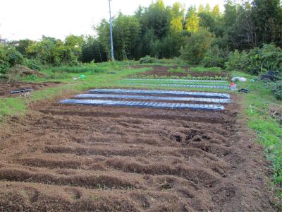 201111少しずつ埋まるそらの畑