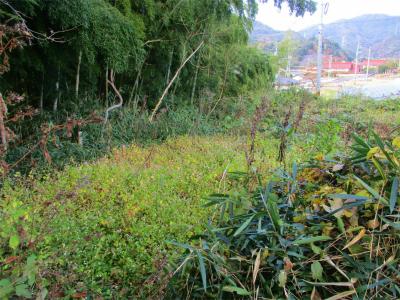 201115耕作放棄地2