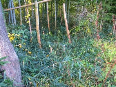 201115竹やぶ入り口