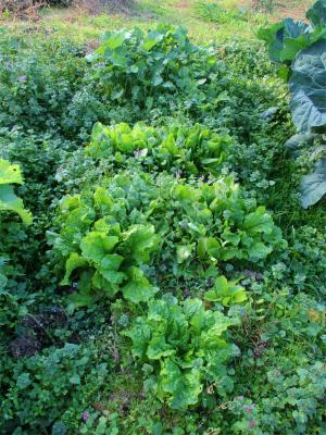 201117野菜苗