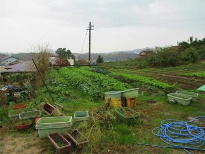 201203安菜蔵3