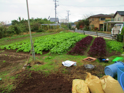 201203安菜蔵5