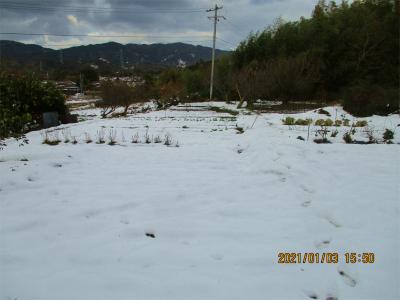 210103雪のそらの畑