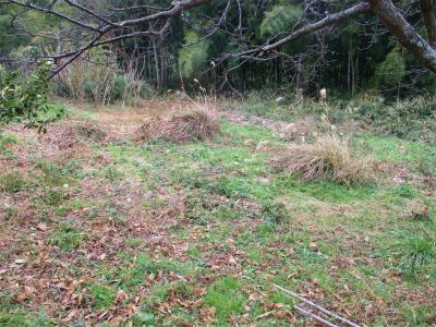 210128冬枯れの耕作放棄地