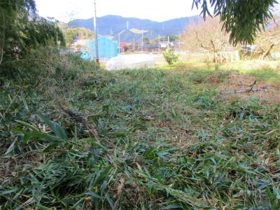 210131篠竹狩り着手