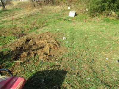 210131竹の地下茎掘り
