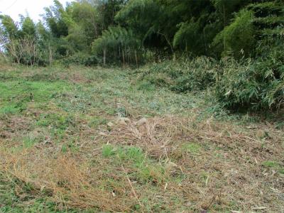210205篠竹を刈ったところ