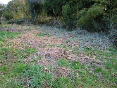 210319耕作放棄地