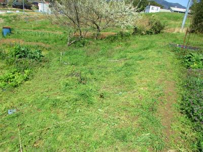 210323草刈り開始1