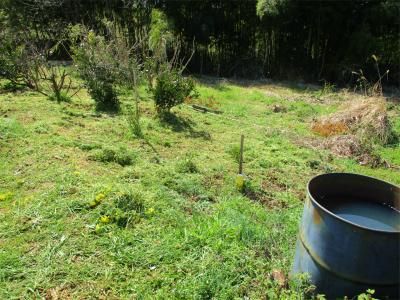 210323草刈り開始2