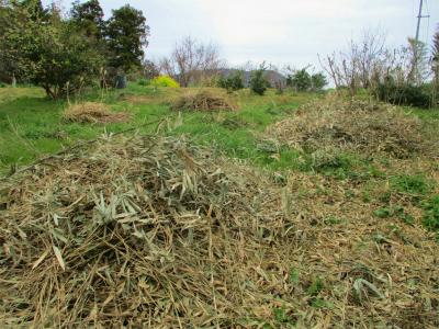 210327刈った篠竹の片付け2