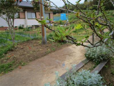 2103027山椒も芽吹いて筍を呼んでる