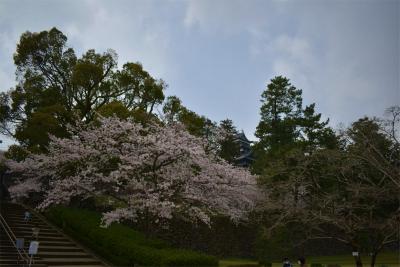 210329桜の松江城1