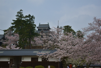 210329桜の松江城3