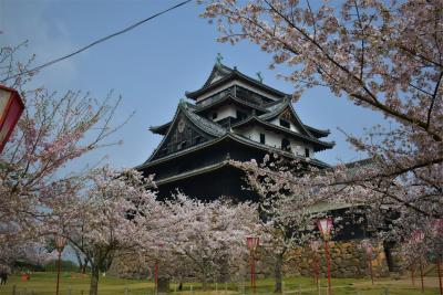 210329桜の松江城4