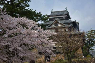 210329桜の松江城9