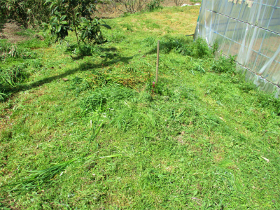 210331草刈り1