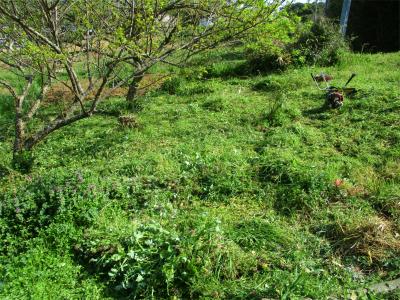 210401草刈り1