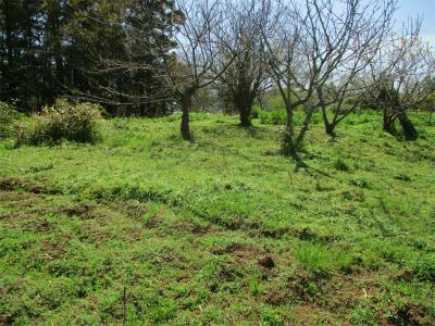 210401草刈り3