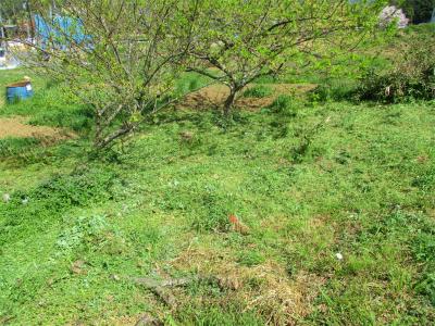 210401草刈り2
