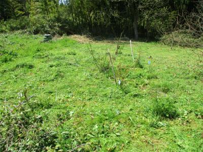 210401草刈り5
