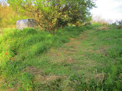 210406耕作放棄地との境、刈った所