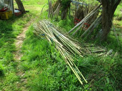 210412竹の支柱