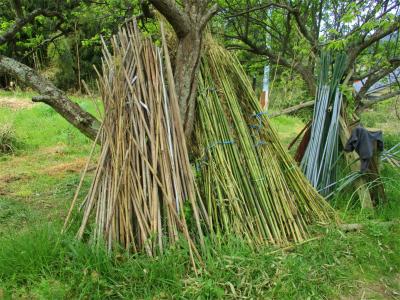 210412竹の支柱はスタンバイ
