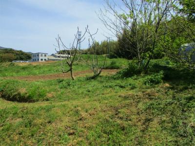 210412畑中央部の草刈り1