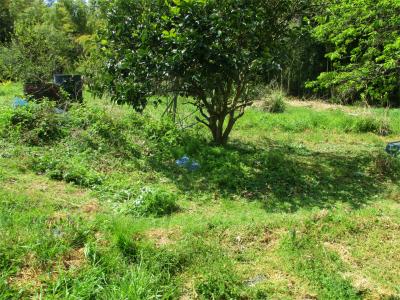 210412八朔周りの草刈り
