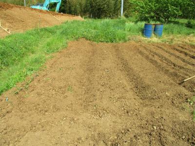210420里芋の畝作り終了