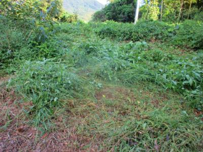 210909奥の草刈り1