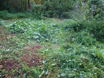 210909奥の草刈り2