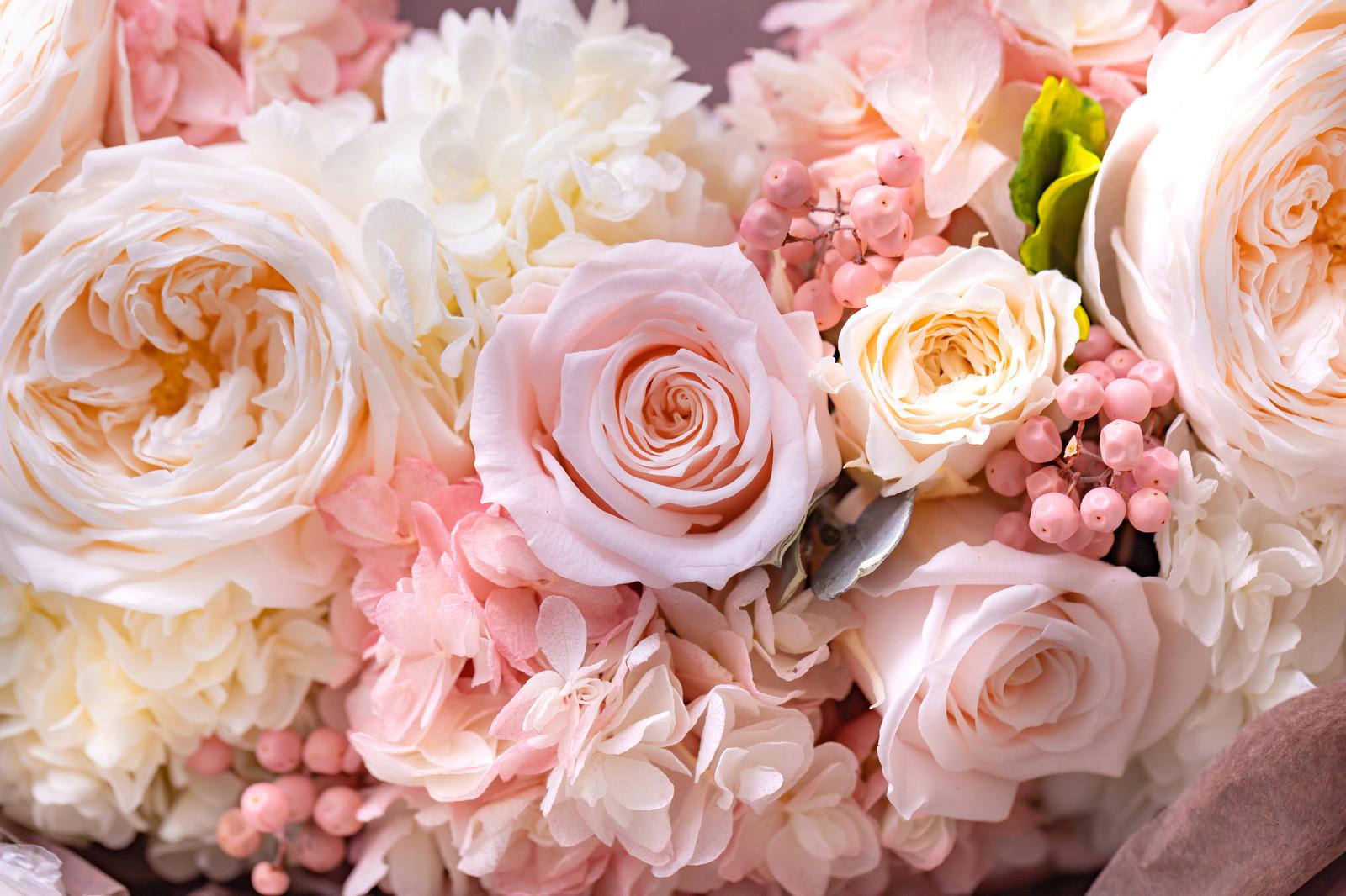 flower420153_TP_V.jpg