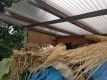 藁小屋の猫たち